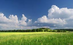 Lato obszar trawiasty, zieleni lato łąka/ Obrazy Royalty Free