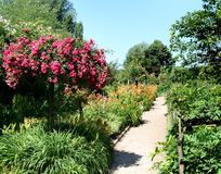 Lato ogród obraz royalty free