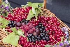 Lato owoc Zdjęcie Royalty Free