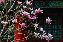 Lato Pałac Magnoliowy Kwiat Fotografia Royalty Free