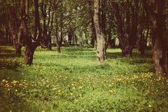 Lato park z dandelion zdjęcie royalty free