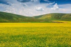 Lato pastoralna sceneria Fotografia Royalty Free