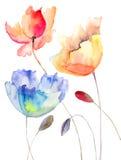 Lato piękni kwiaty Obraz Stock