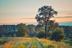 Lato piękny krajobraz Zdjęcie Royalty Free