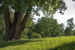 Lato piękny krajobraz Obraz Stock