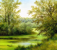 Lato piękny krajobraz Zdjęcia Royalty Free
