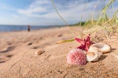 Lato plaża w tropikalnym raju Obrazy Stock