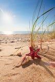 Lato plaża w tropikalnym raju Zdjęcia Stock