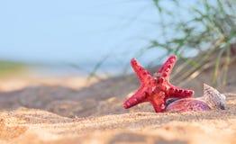 Lato plaża w tropikalnym raju z starfi i seashell Zdjęcia Royalty Free