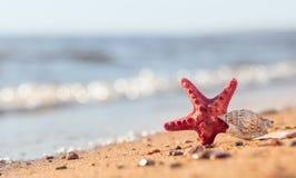 Lato plaża w tropikalnym raju z starfi i seashell Zdjęcie Stock