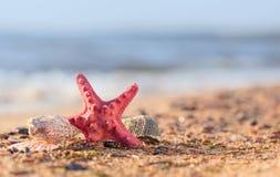 Lato plaża w tropikalnym raju z starfi i seashell Obraz Stock