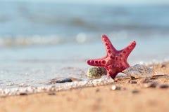 Lato plaża w tropikalnym raju z starfi i seashell Obrazy Stock