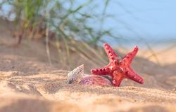 Lato plaża w tropikalnym raju z starfi i seashell Fotografia Stock