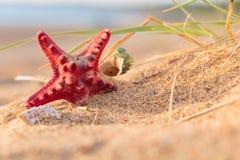 Lato plaża w tropikalnym raju z starfi i seashell Obraz Royalty Free