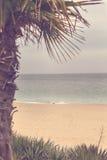 Lato plaża - drzewko palmowe, woda morska Złoci piaski, Varna, Bułgaria Obraz Stock