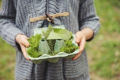 Lato plenerowa aktywność dla dzieciaków - śmieciarza polowanie, liście sortuje w jajecznym pudełku Zdjęcia Stock