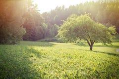Lato przy farmą Zdjęcie Stock