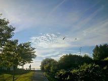 Lato ptaków n popiół Zdjęcia Stock