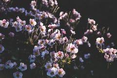 Lato rośliny Obraz Stock