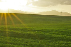 Lato rolniczy krajobraz Zdjęcia Stock