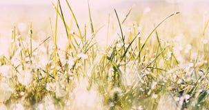 Lato rosa, mokra trawa zbiory