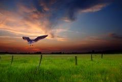 lato słońca Fotografia Stock