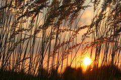 lato słońca Obraz Stock