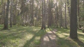 Lato słoneczny dzień w brzoza lesie zbiory