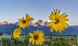 Lato słoneczniki Zdjęcia Royalty Free