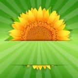 Lato słonecznikowy plakatowy szablon Obraz Stock