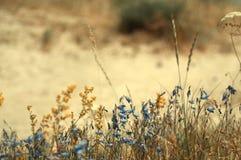 Lato scena z błękitem i kolorem żółtym kwitnie zdjęcie royalty free
