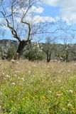 Lato segregujący kwiaty zdjęcia stock