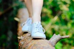 Lato spacer w drewnach zdjęcia stock