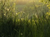 lato, trawa zdjęcie stock