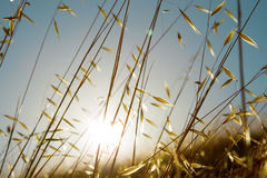 Lato trawy Fotografia Stock
