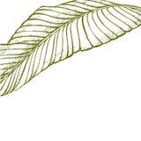 Lato tropikalnych liści wektorowy projekt Abstrakcjonistyczny kwiecisty tło Zaproszenie lub karciany projekt z dżungla liśćmi Fotografia Royalty Free