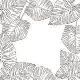 Lato tropikalnych liści wektorowy projekt Abstrakcjonistyczny kwiecisty tło Zaproszenie lub karciany projekt z dżungla liśćmi Zdjęcia Royalty Free