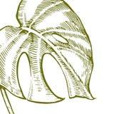 Lato tropikalnych liści wektorowy projekt Abstrakcjonistyczny kwiecisty tło Zaproszenie lub karciany projekt z dżungla liśćmi Fotografia Stock
