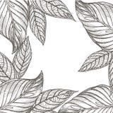 Lato tropikalnych liści wektorowy projekt Abstrakcjonistyczny kwiecisty tło Zaproszenie lub karciany projekt z dżungla liśćmi Zdjęcie Stock