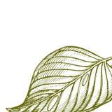Lato tropikalnych liści wektorowy projekt Abstrakcjonistyczny kwiecisty tło Zaproszenie lub karciany projekt z dżungla liśćmi Obraz Royalty Free