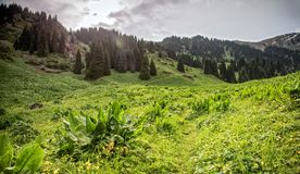 Lato w górach zdjęcia royalty free