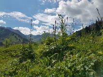 Lato w górach obrazy stock