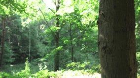 Lato w lesie zbiory