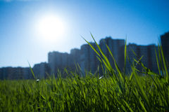 Lato w mieście Fotografia Stock