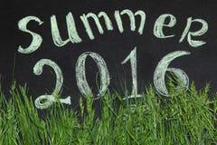 Lato 2016 w zielonej trawie Zdjęcie Royalty Free