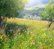 Lato wieś Zdjęcie Stock