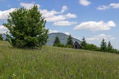 Lato wieś w Sistani zdjęcie stock