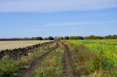 Lato wiejska droga gruntowa między dwa polami Fotografia Royalty Free