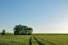 Lato wiejska droga gruntowa między dwa polami Obrazy Royalty Free