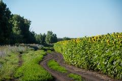 Lato wiejska droga w geen trawie Obraz Royalty Free